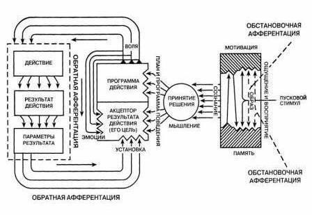 Анохин теория функциональных систем